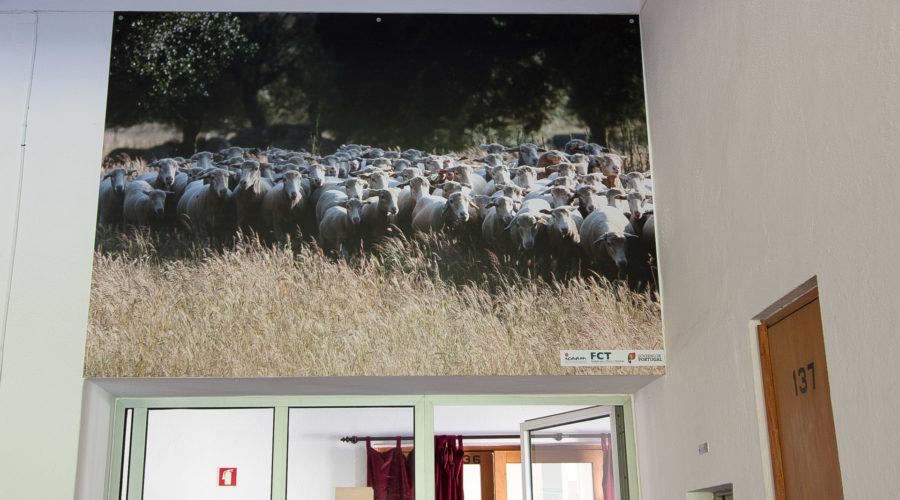 impressao-rigidos-mitra-ovelhas